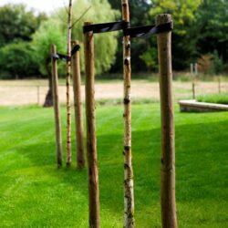 Staat jouw boom al voor paal?
