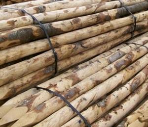 Kastanje hout